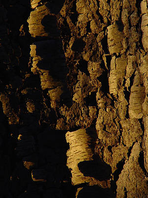 Cummington Photograph - Cherry Bark by Rosemary Wessel