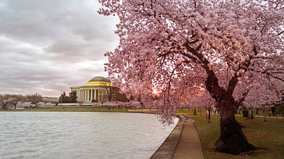 Photograph - Cherry Blossom At Tidal Basin, Dc by Rima Biswas