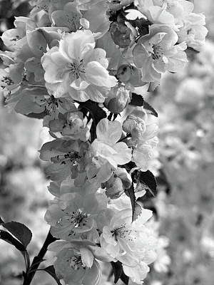 Photograph - Cherry Blossom Black And White Vertical by Gill Billington