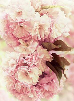 Photograph - Cherry Blossom Blush by Jessica Jenney