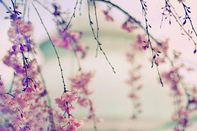 Weeping Cherry Photograph - Cherry Blossom Breeze by Jessica Jenney