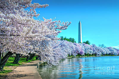 Photograph - Cherry Blossom Canopy Tidal Basin by David Zanzinger