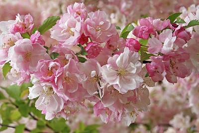 Photograph - Cherry Blossom Closeup by Gill Billington