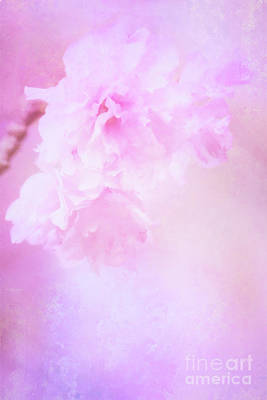 Photograph - Cherry Blossom Delight by Anita Pollak
