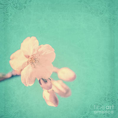 Cherry Flowers Photograph - Cherry Blossom by Delphimages Photo Creations