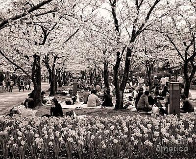 Photograph - Cherry Blossom Festival by Ari Salmela
