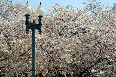 Photograph - Cherry Blossom Festival by Clayton Bruster