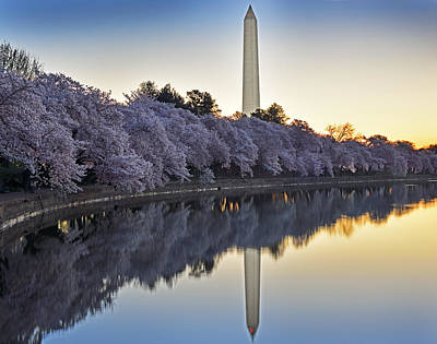 Cherry Blossom Festival - Washington Dc Art Print