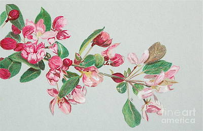 Cherry Blossom Art Print by Glenda Zuckerman