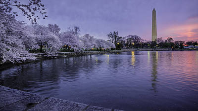 Photograph - Cherry Blossom Glow by Michael Donahue
