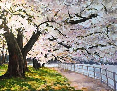 Cherry Blossom In Dc Original