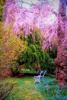 Photograph - Cherry Blossom In Japanese Garden by Lilia D