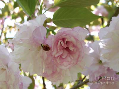 Belinda Landtroop Royalty Free Images - Cherry Blossom Lady Bug Royalty-Free Image by Belinda Landtroop