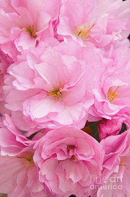 Bringing The Outdoors In - Cherry Blossom Pink by Regina Geoghan