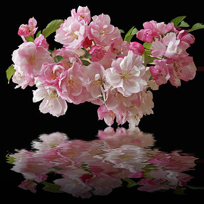 Photograph - Cherry Blossom Reflections On Black by Gill Billington