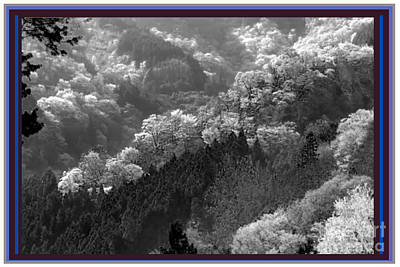 Digital Art - Cherry Blossom Season In Japan Mountain Hills Trees Photography By Navinjoshi At Fineartamerica.com  by Navin Joshi