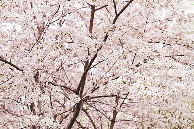 Cherry Blossom Spring Art Print by Ariane Moshayedi