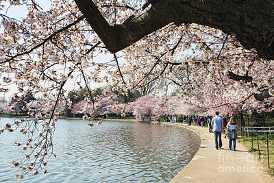 Cherry Blossom Stroll Around The Tidal Basin Art Print