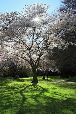 Cherry Blossom Sunshine Art Print by Pierre Leclerc Photography