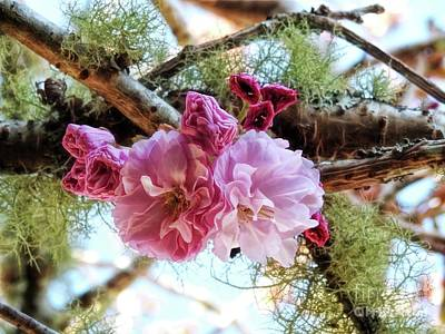 Photograph - Cherry Blossom Time by Peggy Hughes
