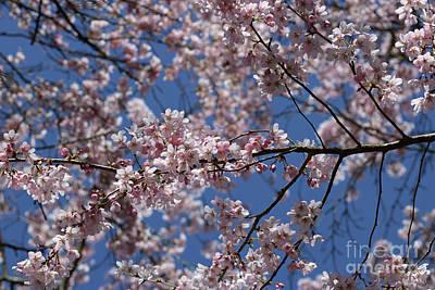 Photograph - Cherry Blossom Tree Against Blue Sky by Julia Gavin
