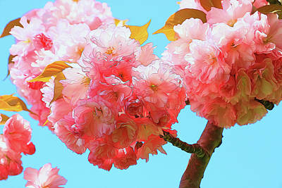 Photograph - Cherry Blossom Trees Of B B G # 6 by Allen Beatty