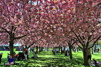 Photograph - Cherry Blossom Trees Of B B G # 7 by Allen Beatty