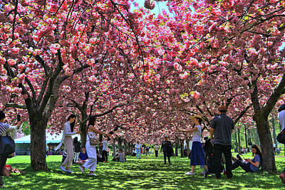 Photograph - Cherry Blossom Trees Of B B G # 8 by Allen Beatty