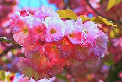 Photograph - Cherry Blossom Trees Of B B G #3 by Allen Beatty