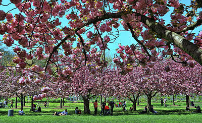 Featured Tapestry Designs - Cherry Blossom Trees of B B G #2 by Allen Beatty