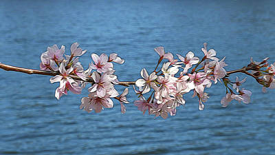 Photograph - Cherry Blossom Trees Of Branch Brook Park 2 - Photopainting by Allen Beatty