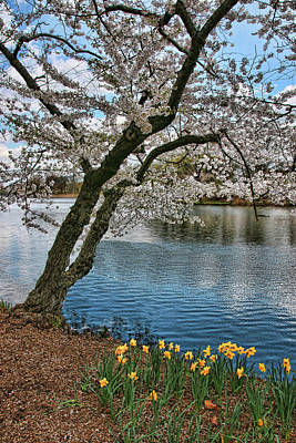 Photograph - Cherry Blossom Trees Of Branch Brook Park 20 by Allen Beatty