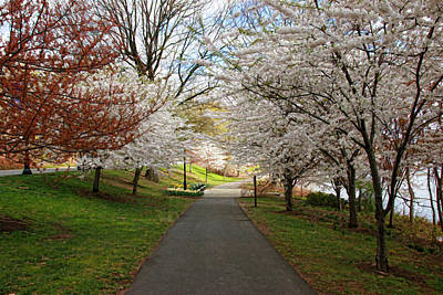 Photograph - Cherry Blossom Trees Of Branch Brook Park 23 by Allen Beatty