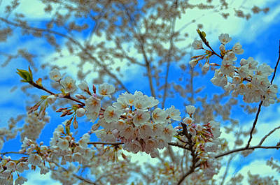Photograph - Cherry Blossom Trees Of Branch Brook Park 29 by Allen Beatty