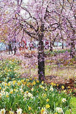 Photograph - Cherry Blossom Trees Of Branch Brook Park 7 by Allen Beatty