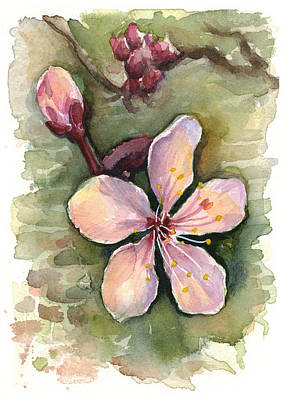 Pink Flower Branch Painting - Cherry Blossom Watercolor by Olga Shvartsur