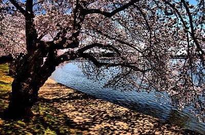 Cherry Blossoms - Washington Dc Art Print by Wayne Higgs