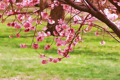 Photograph - Cherry Blossom Trees Of Branch Brook Park 4 by Allen Beatty