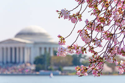 Photograph - Cherry Blossoms And Jefferson Memorial by Steven Green
