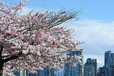 Photograph - Cherry Blossoms And Skyline by Fraida Gutovich