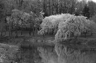 Photograph - Cherry Blossoms And The Pond - Holmdel Park by Angie Tirado