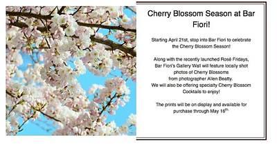 Photograph - Cherry Blossoms At Al Fiori by Allen Beatty