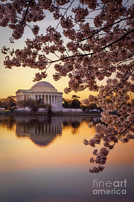 Photograph - Cherry Blossoms At Jefferson Memorial by Brian Jannsen