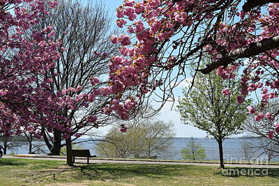 Farmanimals Photograph - Cherry Blossoms At National Park New Jersey by Barrie Stark