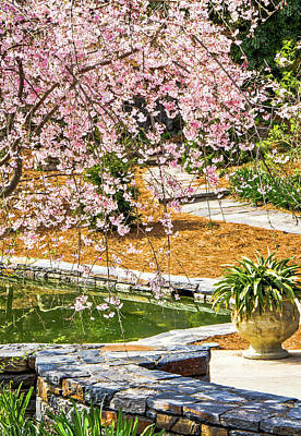 Photograph - Cherry Blossoms At Sarah P Duke Gardens by Joni Eskridge