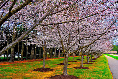 Photograph - Cherry Blossoms At The Beach by Don Mercer