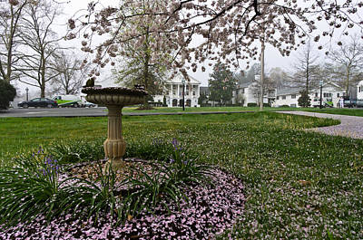 Photograph - Cherry Blossoms At The Federal Executive Institute by Lori Coleman