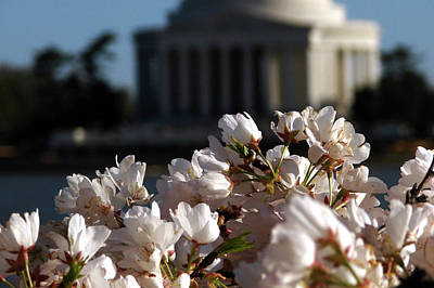 Jefferson Memorial Digital Art - Cherry Blossoms At The Jefferson Memorial by Cathy Mounts