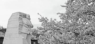 Photograph - Cherry Blossoms At The Martin Luther King Memorial -- 2 by Cora Wandel