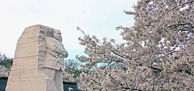 Photograph - Cherry Blossoms At The Martin Luther King Memorial by Cora Wandel